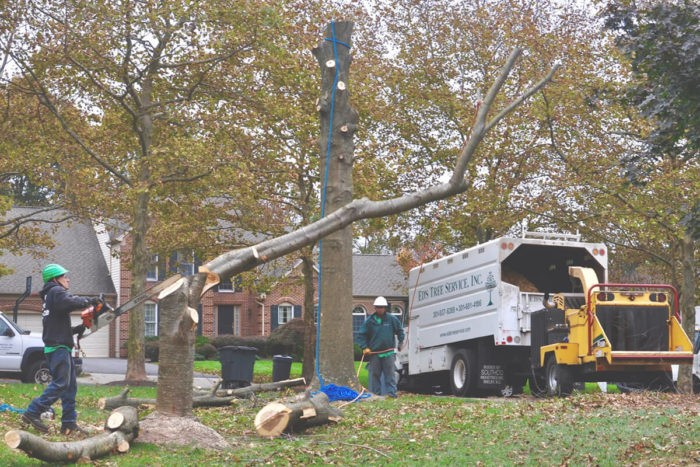 Fort Myers Best Tree Trimming and Tree Removal Services-247 Tree Removal-We Offer Tree Trimming Services, Tree Removal, Tree Pruning, Tree Cutting, Residential and Commercial Tree Trimming Services, Storm Damage, Emergency Tree Removal, Land Clearing, Tree Companies, Tree Care Service, Stump Grinding, and we're the Best Tree Trimming Company Near You Guaranteed!