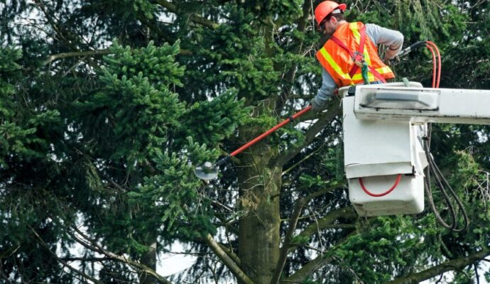 Fort Myers Best Tree Trimming and Tree Removal Services-Commercial Trimming Tree Services-We Offer Tree Trimming Services, Tree Removal, Tree Pruning, Tree Cutting, Residential and Commercial Tree Trimming Services, Storm Damage, Emergency Tree Removal, Land Clearing, Tree Companies, Tree Care Service, Stump Grinding, and we're the Best Tree Trimming Company Near You Guaranteed!