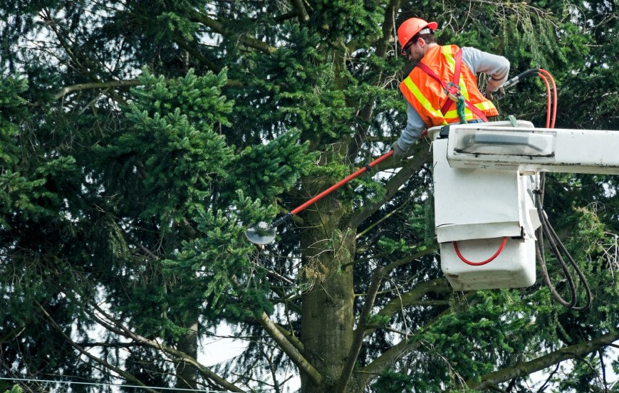 Commercial Trimming Tree Services