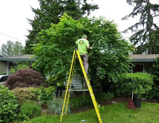 Fort Myers Best Tree Trimming and Tree Removal Services-Residential Trimming Tree Services-We Offer Tree Trimming Services, Tree Removal, Tree Pruning, Tree Cutting, Residential and Commercial Tree Trimming Services, Storm Damage, Emergency Tree Removal, Land Clearing, Tree Companies, Tree Care Service, Stump Grinding, and we're the Best Tree Trimming Company Near You Guaranteed!