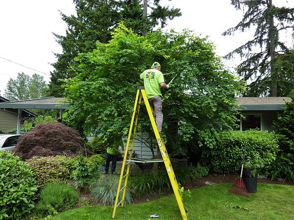 Residential Trimming Tree Services