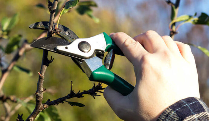 Fort Myers Best Tree Trimming and Tree Removal Services-Tree Pruning-We Offer Tree Trimming Services, Tree Removal, Tree Pruning, Tree Cutting, Residential and Commercial Tree Trimming Services, Storm Damage, Emergency Tree Removal, Land Clearing, Tree Companies, Tree Care Service, Stump Grinding, and we're the Best Tree Trimming Company Near You Guaranteed!