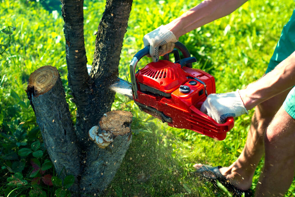 Fort Myers Best Tree Trimming and Tree Removal Services-Tree Trimming-We Offer Tree Trimming Services, Tree Removal, Tree Pruning, Tree Cutting, Residential and Commercial Tree Trimming Services, Storm Damage, Emergency Tree Removal, Land Clearing, Tree Companies, Tree Care Service, Stump Grinding, and we're the Best Tree Trimming Company Near You Guaranteed!