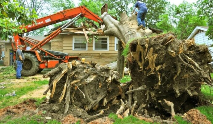 Fort Myers Best Tree Trimming and Tree Removal Services-Tree removal-We Offer Tree Trimming Services, Tree Removal, Tree Pruning, Tree Cutting, Residential and Commercial Tree Trimming Services, Storm Damage, Emergency Tree Removal, Land Clearing, Tree Companies, Tree Care Service, Stump Grinding, and we're the Best Tree Trimming Company Near You Guaranteed!