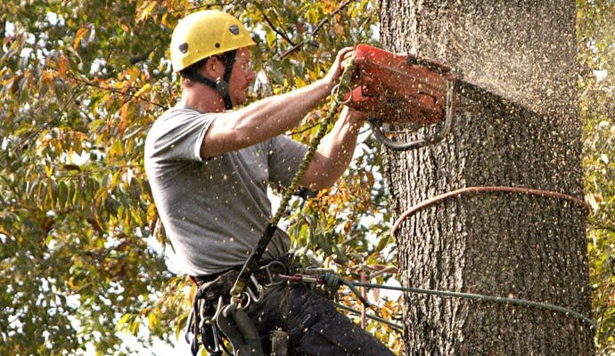 Fort Myers Best Tree Trimming and Tree Removal Services2-We Offer Tree Trimming Services, Tree Removal, Tree Pruning, Tree Cutting, Residential and Commercial Tree Trimming Services, Storm Damage, Emergency Tree Removal, Land Clearing, Tree Companies, Tree Care Service, Stump Grinding, and we're the Best Tree Trimming Company Near You Guaranteed!