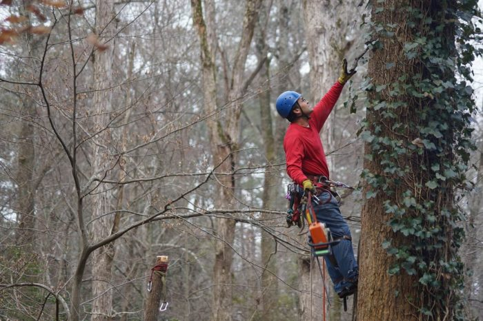Fort Myers Best Tree Trimming and Tree Removal Services6-We Offer Tree Trimming Services, Tree Removal, Tree Pruning, Tree Cutting, Residential and Commercial Tree Trimming Services, Storm Damage, Emergency Tree Removal, Land Clearing, Tree Companies, Tree Care Service, Stump Grinding, and we're the Best Tree Trimming Company Near You Guaranteed!